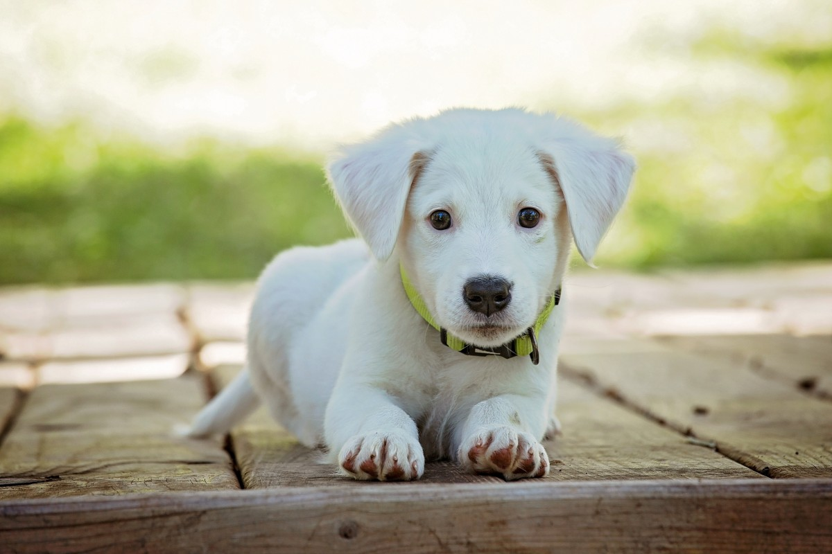 Us Service Animals Your Guide To House Training A Puppy