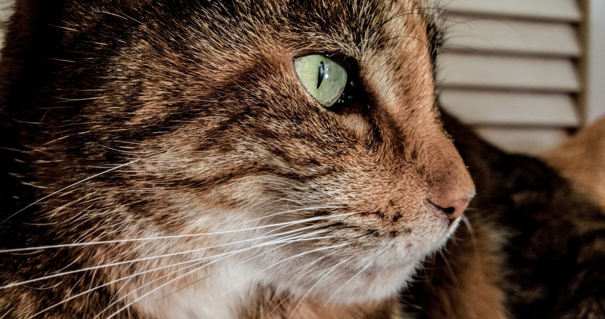 Emotional Support Cats | Benefits & How To Register Your Cat