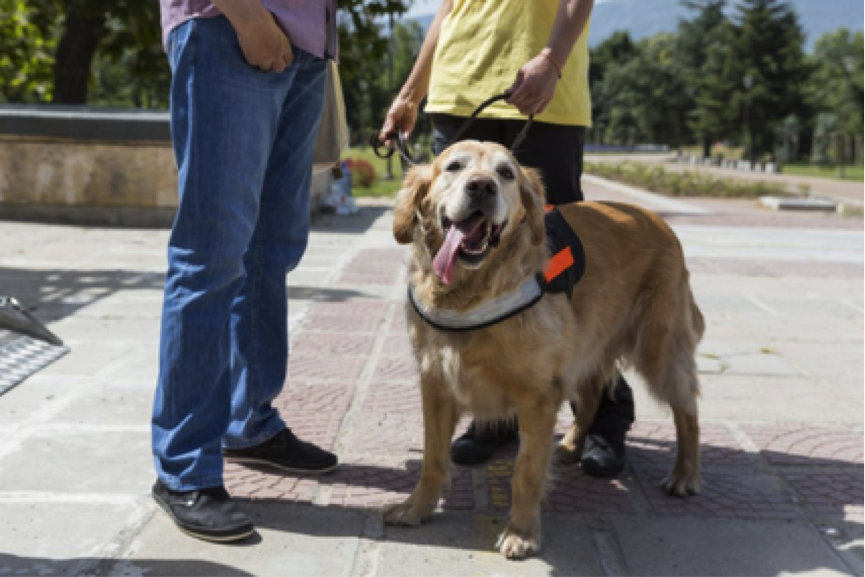 US Service Animals - Service Dog for Fibromyalgia   How They Can Help