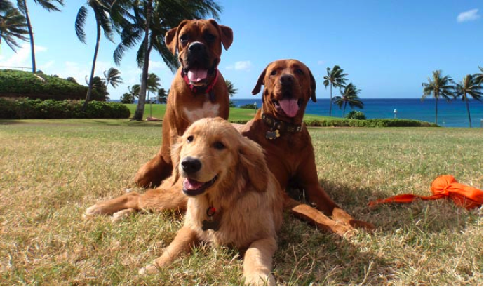 Service Dog Laws in Hawaii