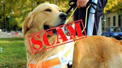 US Service Animals - Are You Falling for an Emotional Support Animal Scam?