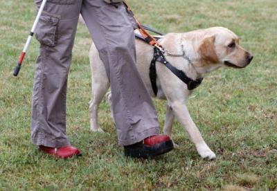 The Difference Between a Service Animal and an Emotional Support Animal