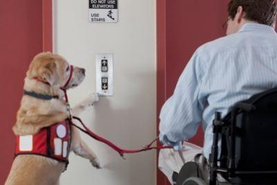 SERVICE ANIMALS: What Yоu Should Know