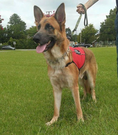 US Service Animals - Why Our Customers Love Our Service Vests