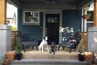 Airbnb Policy For Service Animals And ESAs