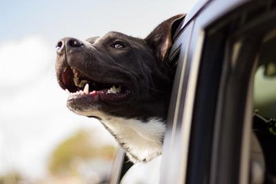 Tips For Traveling Long Distance With A Pet