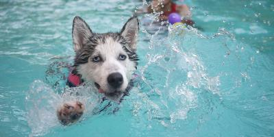 Emotional Support Animals and Apartment Pool Policies