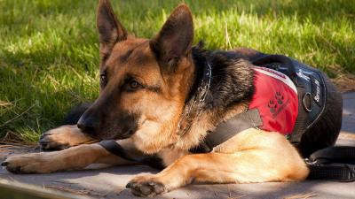 US Service Animals - Must-have Supplies for Service Animals
