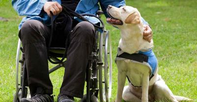 US Service Animals - What Disabilities Qualify for a Service Dog? Our Comprehensive Guide