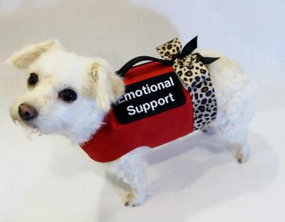 US Service Animals - Emotional Support Animal Laws | See What Rights You Have