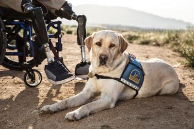 US Service Animals - Who Qualifies for a Service Dog?