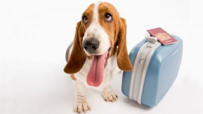 US Service Animals - Bringing A Dog To The UK | Regulations & Vaccinations