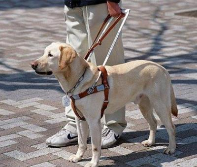 US Service Animals - Your Ultimate Guide to Service Animals - Everything You Need To Know