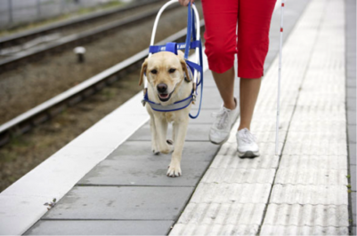 US Service Animals - Service Dog for Multiple Sclerosis | How They Can Help