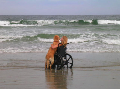 US Service Animals - Service Animal Laws in Florida | What You Need To Know