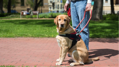 US Service Animals - Service Dog Laws In Virginia | Virginia's Disability Rights Law