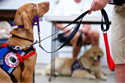 US Service Animals - Service Animal Laws in Alabama | Where Service Animals Are Allowed
