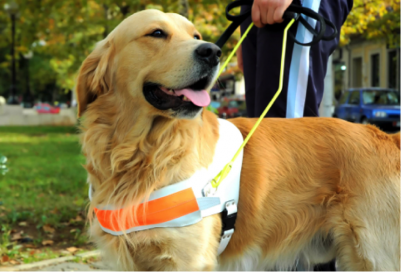 US Service Animals - Service Animal Laws in California | The Rules In Public Places & Housing