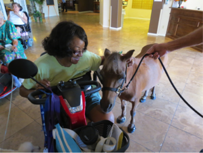 US Service Animals - Miniature Horses as Service Animals | What Can They Do?