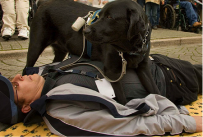 US Service Animals - Service Dog for Seizures | How To Get One & How They Can Help