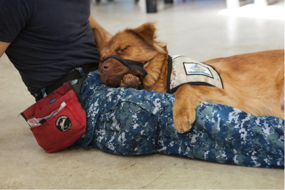 US Service Animals - Service Dog for Panic Attacks | How They Can Help & How To Qualify