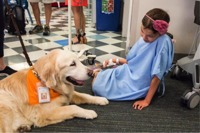 US Service Animals - What is A Therapy Dog? How Are They Different From An ESA