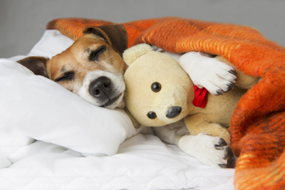 US Service Animals - Melatonin for Dogs | Best Way To Help Your Dog Stay Calm