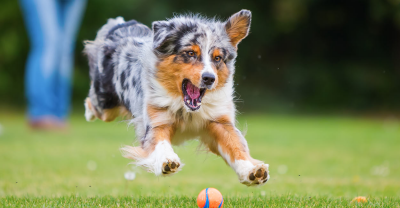 Healthiest Dog Breeds | Live A Long & Full-filling Life With Your Dog