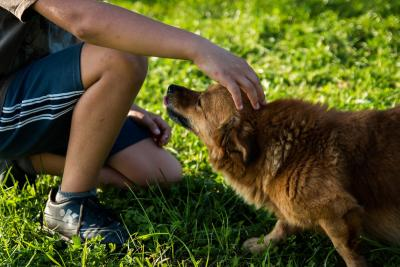 Emotional Support Dog Training | Help Your Pet Support You